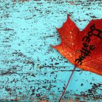 leaf project 1
